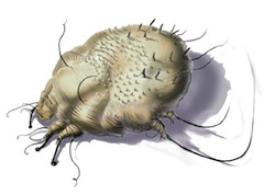 scabies causes - scabies treatments, Cephalic Vein