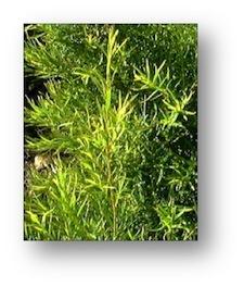Natural Scabies Treatments Archives - Scabies Treatments